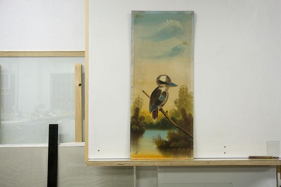 Kookaburra to be framed